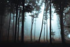 Mörka konturer av spöklika träd i dimmigt skogallhelgonaaftonmörker arkivbild
