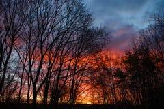 Mörka konturer av träd och fantastisk molnig himmel på solnedgång royaltyfria foton