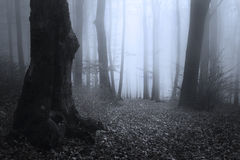 Mörka konturträd i blå dimmig skog Arkivbild