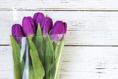 Mörka lila tulpan i plast- förpacka på en vit träbakgrund royaltyfria foton