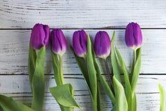 Mörka lila tulpan i plast- förpacka på en vit träbakgrund royaltyfri foto