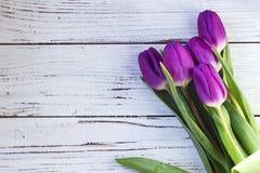 Mörka lila tulpan i plast- förpacka på en vit träbakgrund fotografering för bildbyråer