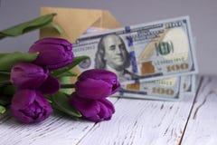 Mörka lila tulpan och pengarsedlarna USA på en vit träbakgrund fotografering för bildbyråer