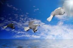 mörka ljusa seagulls till Arkivfoton