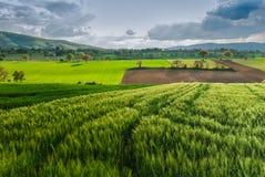 Mörka oklarheter över vetefält royaltyfria foton