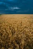 Mörka oklarheter för storm över fält Arkivfoto