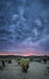 Mörka regnmoln över den Cholla kaktuns royaltyfri bild