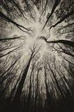 Mörka träd i en mystisk skog på allhelgonaafton Arkivfoto