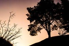 Mörka träd i rosa himmel av solnedgången Arkivbild