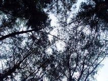 mörka trän Arkivbild