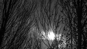 mörka trän arkivfoto