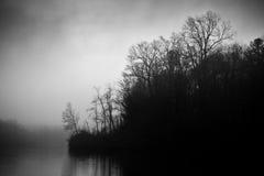 Mörka trän och svartvit sjömist - arkivfoton