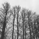 mörka trees royaltyfri fotografi