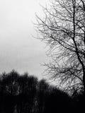 mörka trees Arkivbild