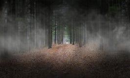 Mörka Wods, skog, dimma, bakgrund som är overklig arkivfoton