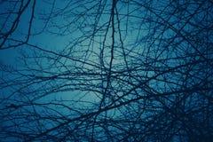Mörker - blå signalbakgrund med modeller av svart ris fotografering för bildbyråer