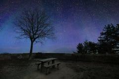 Mörker - blå stjärnklar himmel med svarta trädkonturer Fotografering för Bildbyråer