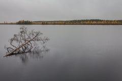 Mörker fördunklar med regn över sjön och det brutna trädet i vattnet i nedgång Royaltyfria Bilder