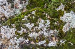 Mörker - gräsplan färgad mossa som växer på kalksten, vaggar arkivfoton