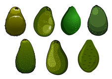 Mörker - gräsplan isolerade avokadofrukter Fotografering för Bildbyråer
