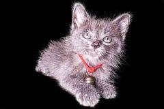 Mörker - grå kattunge som isoleras på svart bakgrund, halloween stil Arkivfoto