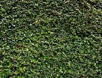 Mörker - grön bladtextur Arkivfoto
