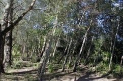 Mörker - gröna träd i skog Royaltyfri Fotografi