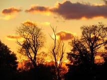 Mörker och föraning Silhouetted träd Royaltyfria Bilder
