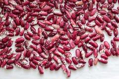 Mörker - röd haricot på en vit background_ arkivfoton