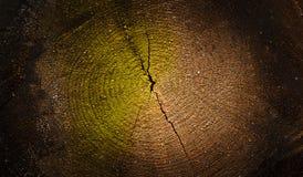 Mörker texturerad wood tvärsnittbakgrund Royaltyfri Fotografi