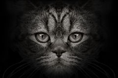 Mörker tystar ned kattnärbild Bekläda beskådar Arkivfoton
