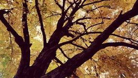 Mörkernedgångar fotografering för bildbyråer