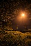 Mörkerskugga av trädet Royaltyfria Foton