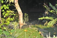 Mörkerträdgård Fotografering för Bildbyråer
