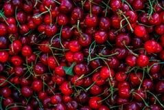 mörkröda Cherry Arkivbild