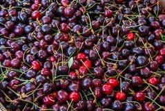 mörkröda Cherry Royaltyfria Bilder