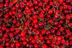 mörkröda Cherry Royaltyfri Foto