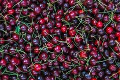 mörkröda Cherry Arkivfoton