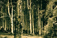 Mörkret i skogen royaltyfri fotografi