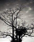 mörkt Fotografering för Bildbyråer