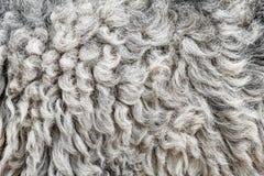 Mörkt abstrakt begrepp för textur för fårhudbakgrund Arkivbild