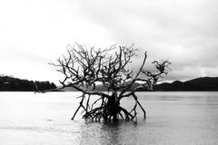 Mörkt dött träd i svartvitt vatten royaltyfri bild