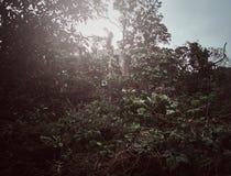 Mörkt foto av gröna busksnår i ett dystert, cloudly dag fotografering för bildbyråer