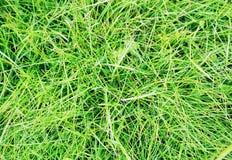 Mörkt - grön grästextur Fotografering för Bildbyråer