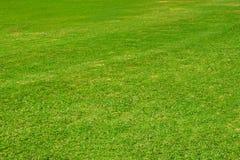 Mörkt - grön trädgårdgräsmatta arkivbilder