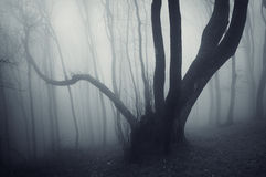 Mörkt läskigt mystiskt kusligt mörkt träd i en mörk mystisk skog med dimma Fotografering för Bildbyråer