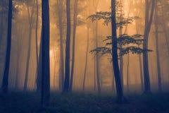 Mörkt skoglandskap med dimma Arkivfoto