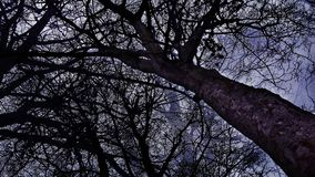 mörkt trä Arkivfoto