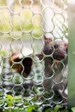 Möss i en bur Royaltyfri Bild