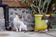 Möt katterna Royaltyfri Fotografi
